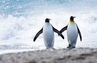 pingvin_love
